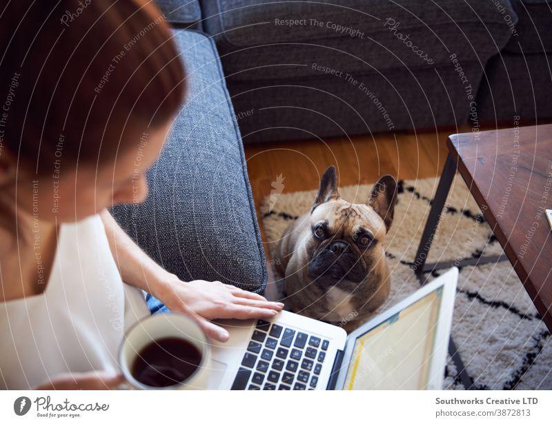 Lächelnde Frau, die am Laptop arbeitet, sitzt auf dem Sofa und trinkt Kaffee Hund Haustier Person Computer 20s schreibend Morgen jung im Innenbereich Schüler