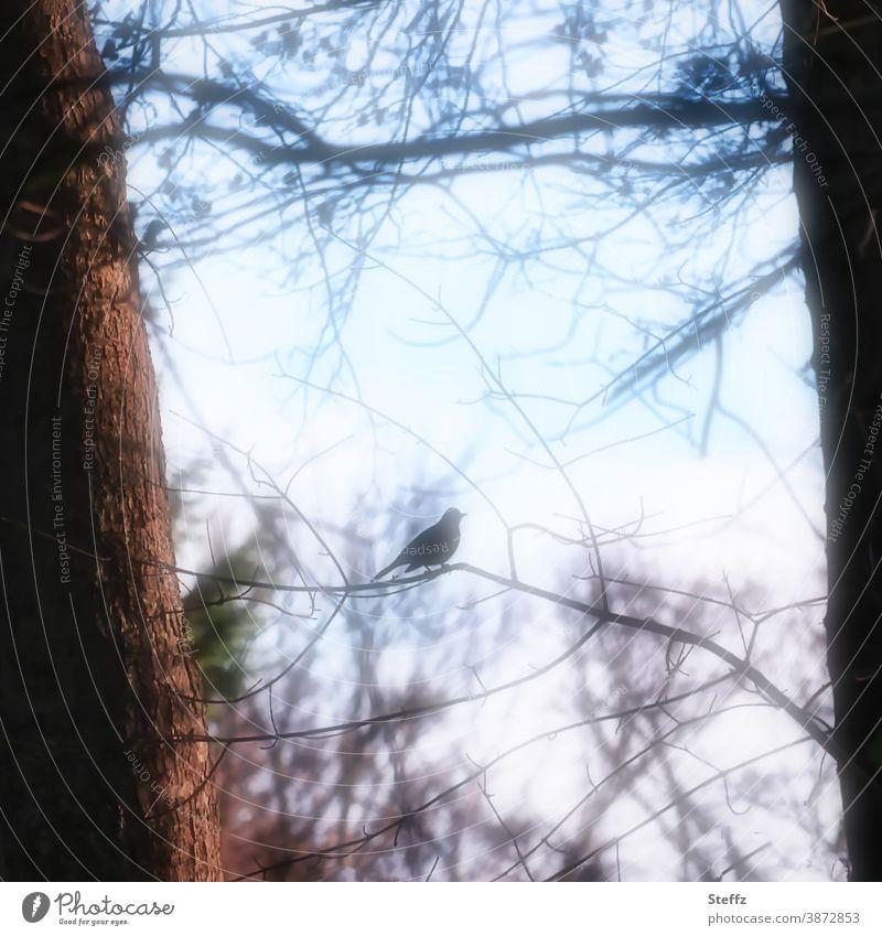 ein Vogel in Resonanz mit dem Novemberlicht Stimmungsbild Amsel Lichtschein Sehnsucht Ruhe besonderes Licht Silhouette laublos Novemberbild