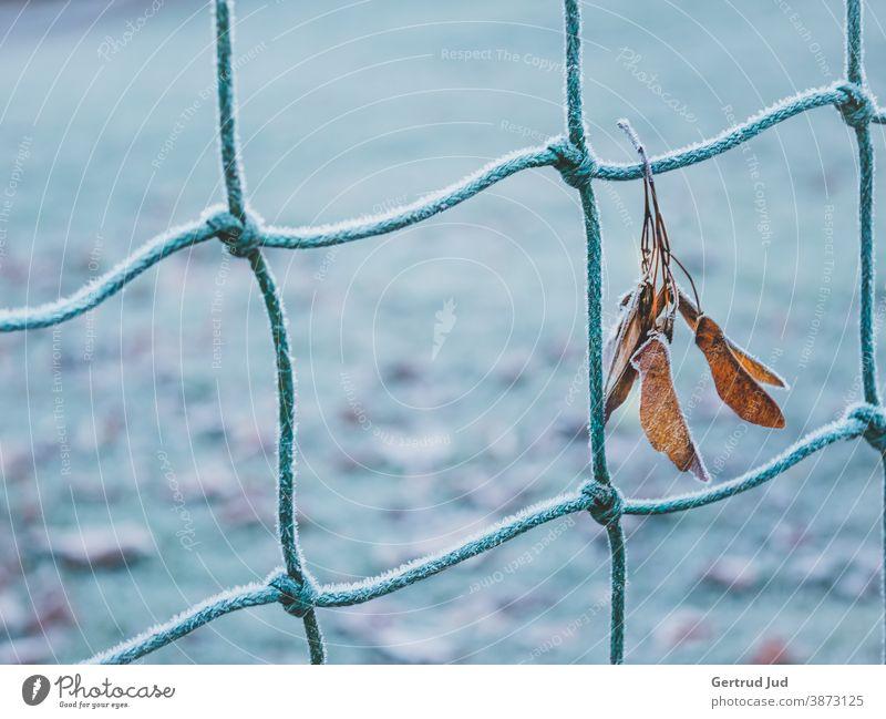 Blatt hängt an einem Zaun mit Raureif Herbst Herbstfarben Natur blau Herbstblätter herbstblatt kalt