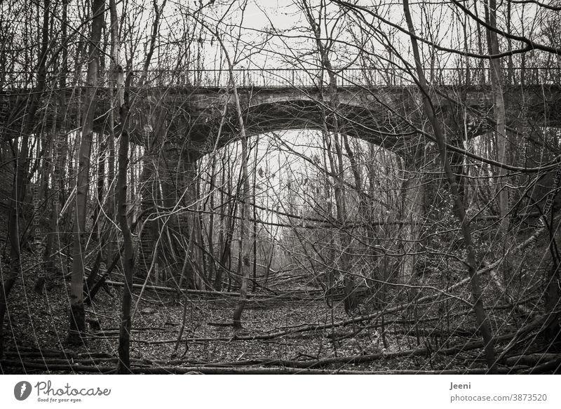Alte Eisenbahnbrücke im Wald - verlassener Ort, zugewachsen mit Bäumen und Sträuchern Brücke Bahnschienen alt menschenleer Grstrüpp marode Landschaft