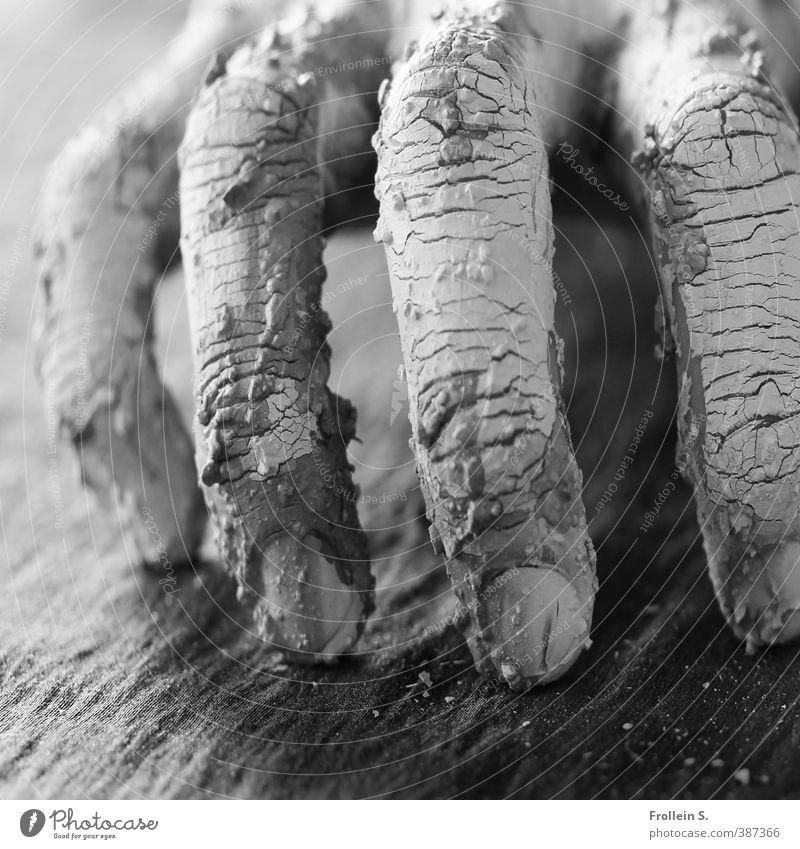 Kraule, kraule Hand Arbeit & Erwerbstätigkeit dreckig Finger bedrohlich berühren Hautfalten gruselig Riss Skulptur Handwerker Gartenarbeit Fingernagel Krallen