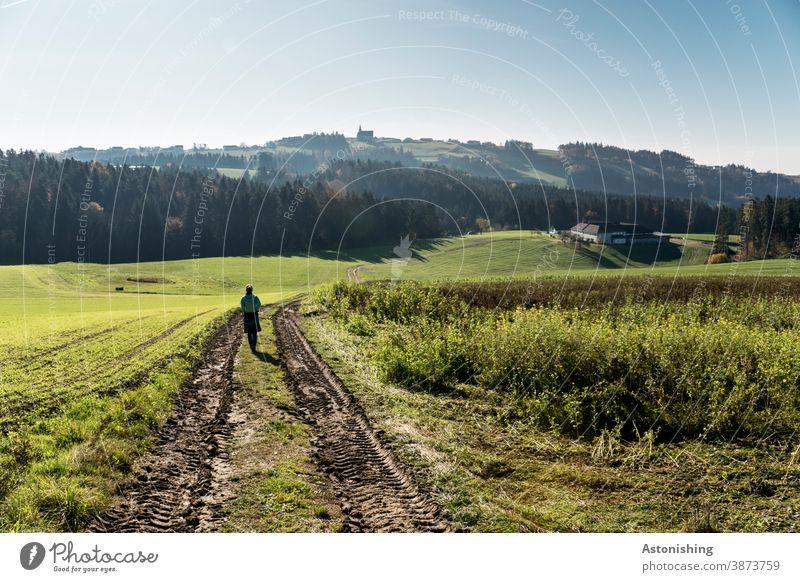 Wandern durch die Landschaft des Mühlviertels Frau Rückansicht Natur Hügel Hügelland Weg Herbst grün Gras Spur Wald Österreich Sonne Wetter gehen schön Himmel