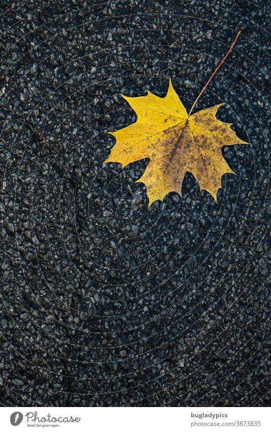 Gelbes Ahornblatt auf Asphalt Blatt Herbst Herbstlaub herbstlich Natur Baum gelb Herbstfärbung Pflanze Umwelt Wandel & Veränderung Laubblatt Laubbaum