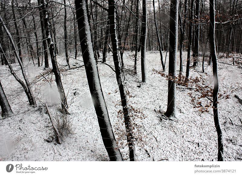verschneiter Buchenwald Winter Schnee Winterwald Forstwald Wald Winterlandschaft Natur Umwelt Außenaufnahme Landschaft winterlich Wintertag Winterstimmung Baum