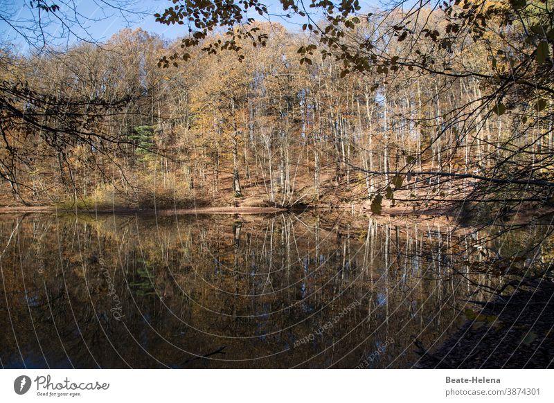 Gespiegelte Herbstimpressionen Landschaft Wald See Spiegelung Impressionen Reflexion & Spiegelung Wasser Baum Natur Außenaufnahme Umwelt Pflanze ruhig Seeufer
