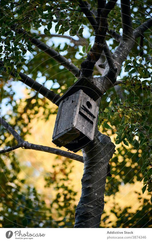 Kleines Vogelhaus auf Baum im Garten Futterhäuschen hölzern Park Wartehäuschen Natur hängen handgefertigt Nest Kasten schäbig Ast Sommer Wald Holz Nutzholz