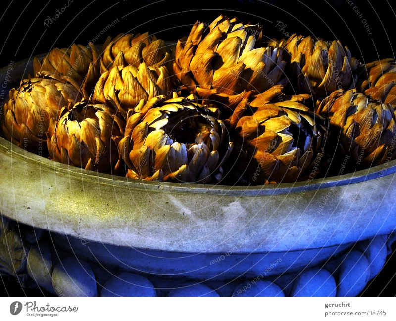 kraut in topf Topf Vase Behälter u. Gefäße historisch stachelig Blatt zupfen Innenarchitektur ausstellen Anhäufung Beleuchtung erleuchten Gesundheit