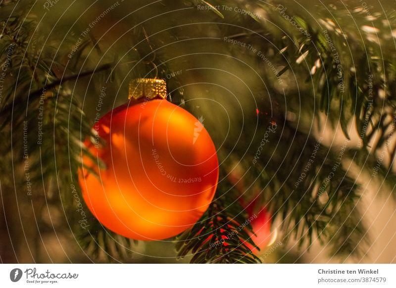 orange Christbaumkugel hängt am Weihnachtsbaum Weihnachten & Advent Weihnachtsdekoration Baumschmuck Kugel Tradition glänzend Dekoration & Verzierung