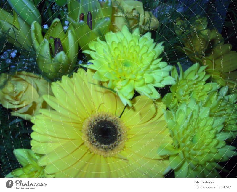 Blumenstrauß vom Schatz Natur Graffiti