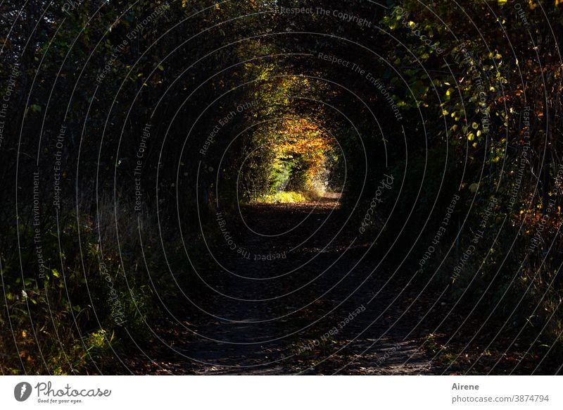 der Weg zum Licht ist lang Lichtblick Wege & Pfade Wald Herbst Mischwald Nadelwald Fußweg Sonnenlicht Spaziergang Spazierweg Zentralperspektive einsam wandern