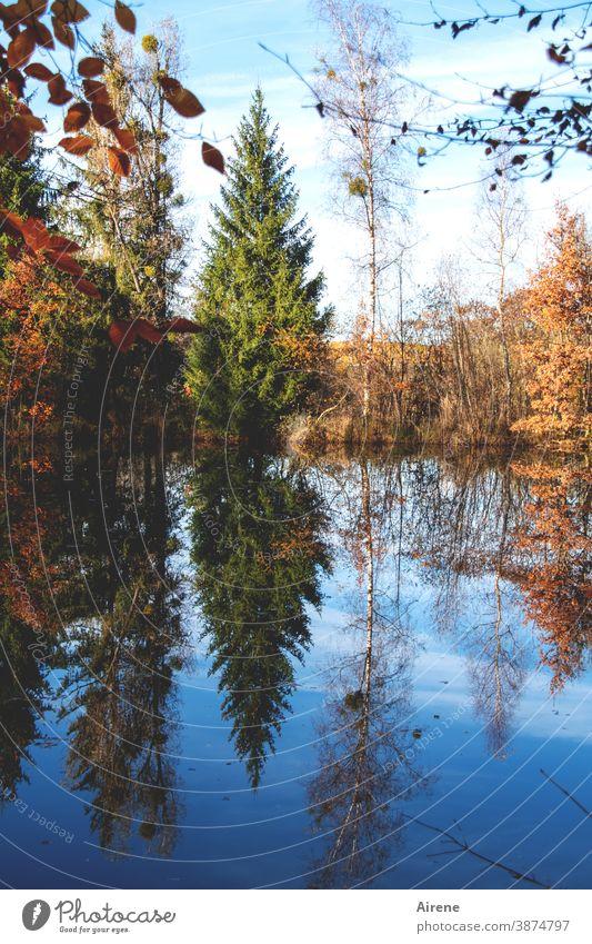 sonntags am See Herbst Reflexion & Spiegelung Baum Herbstlaub orange blau Herbstfärbung Wald Wasserspiegelung Himmel Natur ruhig Schönes Wetter Seeufer grün