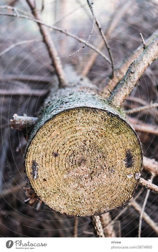 Baumstamm Jahresringe Wald Holz Farbfoto Natur braun Außenaufnahme Menschenleer Baumrinde Strukturen & Formen Umwelt Detailaufnahme Nahaufnahme Pflanze