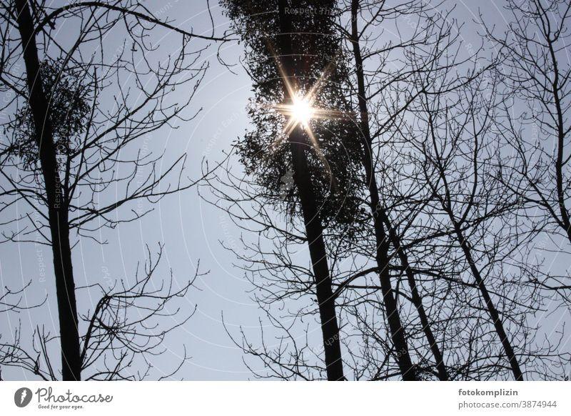 Sonnenstrahl blitzt sternenartig durch Baumwipfel Baumkrone kahle Bäume Winter Forstwald Außenaufnahme Winterstimmung Winterlicht Wetter Klima kalte jahreszeit