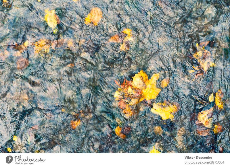 Gelbe Herbstblätter im Wasserstrom Hintergrund abstrakt Baum Muster altehrwürdig Textur Natur Fisch Blatt farbenfroh gelb Wald im Freien orange fallen strömen