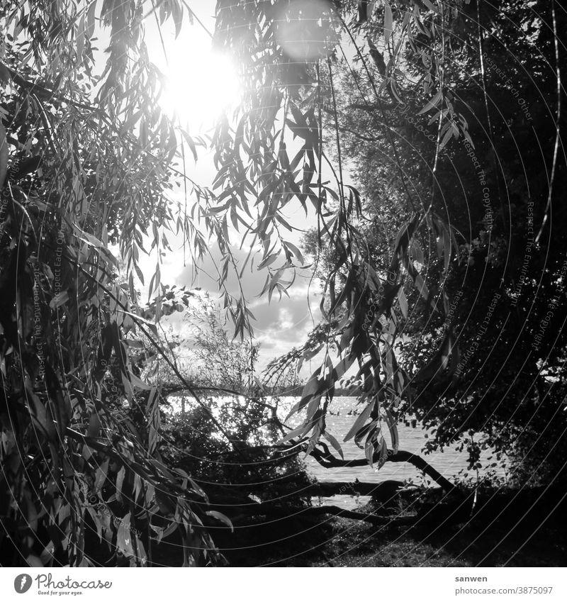 Blick auf eine  See Badesee Wasser Schwimmen Baden Urlaub Sommer Sonne Ferien Romantik romantisch Weide Baum Blätter Sommerurlaub Erholung schönes Wetter