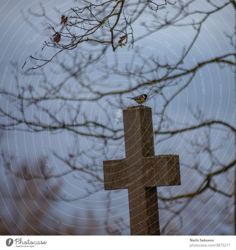Kohlmeise auf altem Friedhofskreuz sitzend Tier schön Schönheit blau Blaumeise Ast hell Farbe farbenfroh bunt Landschaft niedlich Umwelt Feder Garten Lebensraum