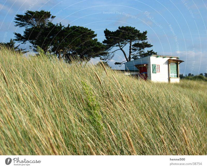 Düne in Bretagne Sommer Strand Wind Europa Frankreich Stranddüne