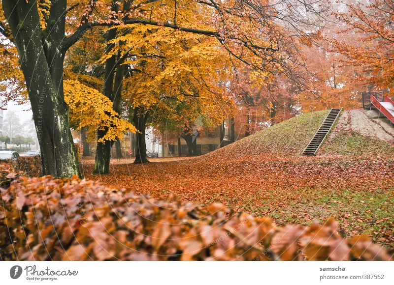herbstlich Natur Pflanze Baum Blatt gelb Umwelt kalt Herbst Park Nebel Jahreszeiten Ende Baumstamm Herbstlaub Spielplatz