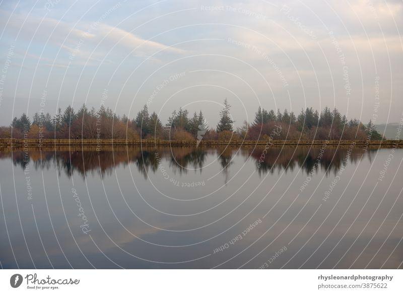 Herbstlich dämmrige Baumwipfel und Staumauer spiegeln sich im Wasser des Stausees Abenddämmerung noch Reflexion & Spiegelung Bäume Wald Landschaft kräuselt