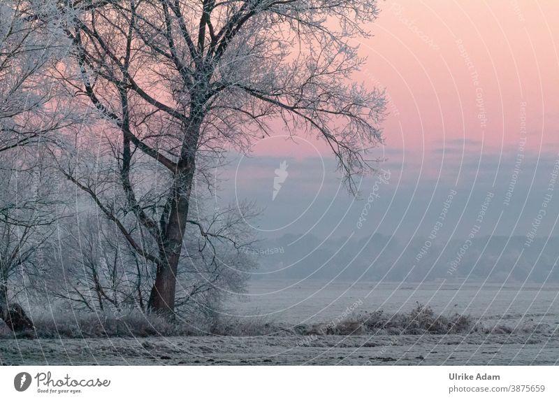Schneelandschaft - Baum mit Raureif bedeckt bei Sonnenaufgang harmonisch Meditation Ferien & Urlaub & Reisen Tourismus Winter Freiheit Winterurlaub