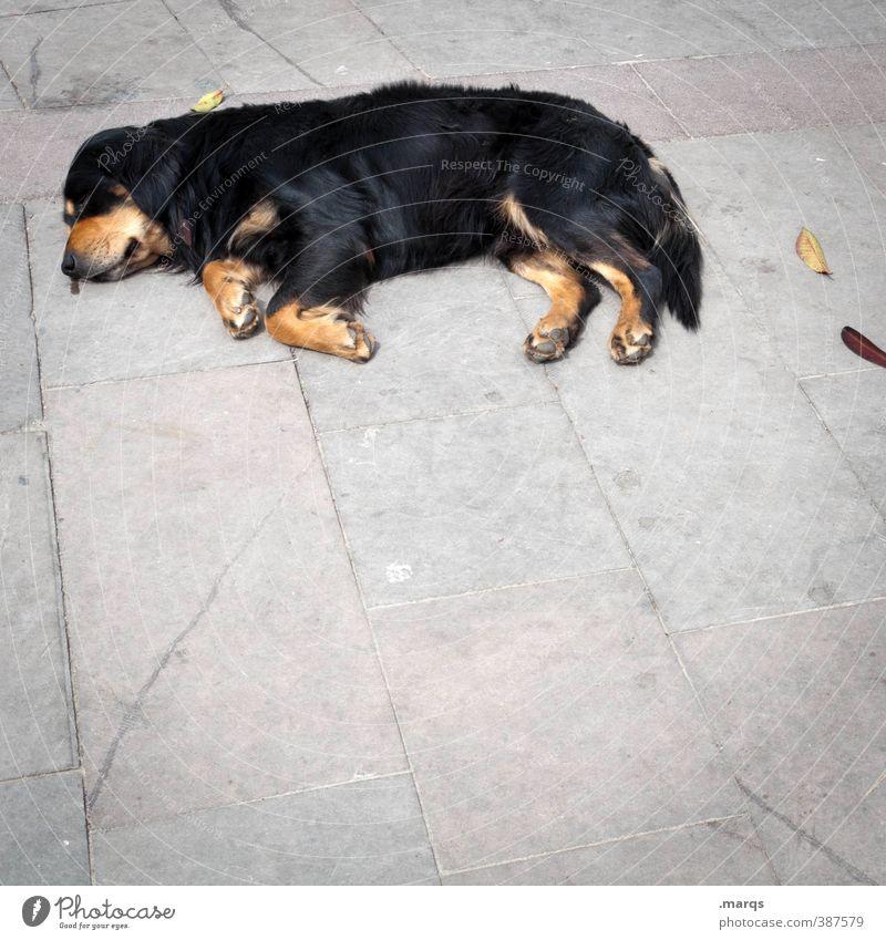 Fauler Hund Tier Haustier 1 Erholung liegen schlafen einfach Müdigkeit Erschöpfung Trägheit bequem Bodenbelag Farbfoto Außenaufnahme Menschenleer