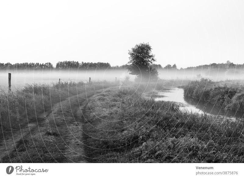 Nebel auf einem Weg zwischen zwei Paddocks und einem kleinen Fluss Baum Bäume Herbst Wald Wälder Wiese Wiesen Ackerland Pferdekoppel schwarz/weiß Himmel pro Tag