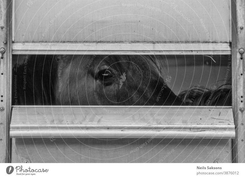 Wildpferd von der Hütte aus gesehen abstrakt Tier Hintergrund Bucht schön Schönheit schwarz braun Kastanie schließen abschließen Nahaufnahme kalt Farbe niedlich