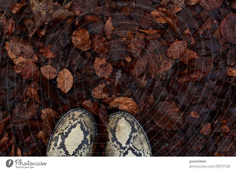 Schuhe im nassen herbstlaub. Herbst schuhe mode schlangenleder herbstlich Blätter Herbstfärbung Boden Natur Jahreszeit Vergänglichkeit Braun muster trend