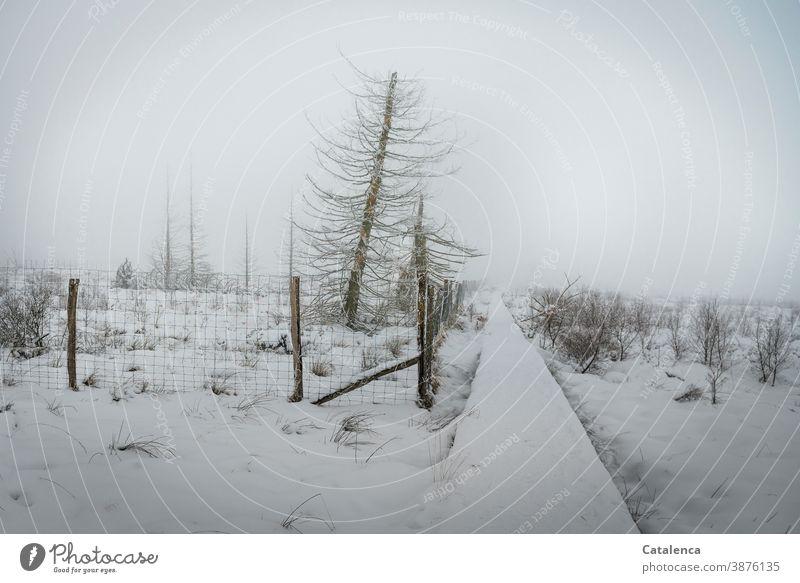 Schneelandschaft im Hochmoor an einem nebeligen Morgen Winter Landschaft Umwelt Nebel Horizont schlechtes Wetter Frost Wege und Pfade Hohes Venn Pflanze Baum