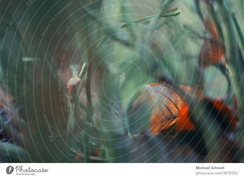 Rot-oranges Herbstblatt im grünen Gras- und Bodengestrüpp Blatt herbstblatt herbstblattfarbe Wiese Natur Herbstlaub Farbfoto Menschenleer Außenaufnahme