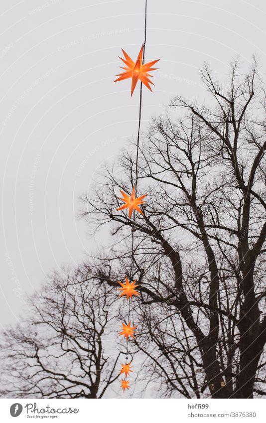 Lichterkette als Weihnachtsbeleuchtung im tristen Grau eines Dezembertages Stern Weihnachten & Advent Weihnachtsdekoration grau Weihnachtsstern