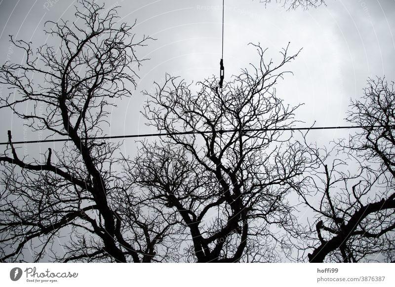 Oberleitung vor Baumstruktur und grau düsterem Himmel Äste kahle Bäume Nebel Ast nass schlechtes Wetter Zweig trist Zweige u. Äste Regen Herbst Park Pflanze