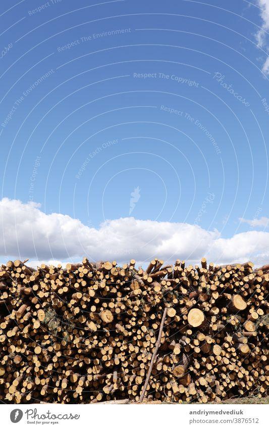 ein Bündel gefällter Bäume in der Nähe eines Abholzungsplatzes. Stapel von Holzscheiten unter blauem Himmel. Platz für Text Kofferraum Nutzholz Material Natur