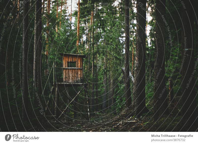 Hochsitz auf der Waldlichtung Hochstand Ansitz Jagd Jäger Lichtung Bäume Sträucher Waldboden Wurzeln Wild bejagen Treppe Geländer Natur Landschaft Versteck
