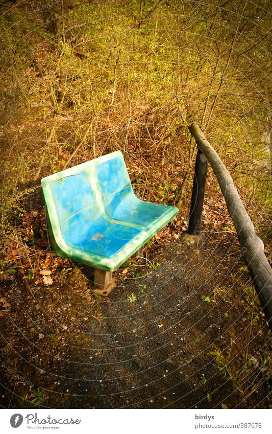 Die Bank für Frank Natur blau grün Sommer Pflanze Farbe Erholung Wald außergewöhnlich Park Design leuchten Sträucher Möbel Originalität Parkbank