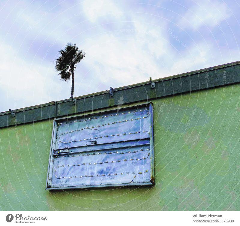 Kein Zeichen grün Palme Kalifornien Außenaufnahme Farbfoto Tag USA Menschenleer Achtsamkeit Regie Hinweisschild Himmel Textfreiraum oben Los Angeles Erholung