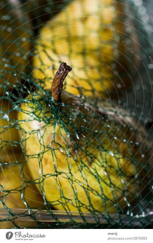 Schrumpelstilchen einer reifen Birne, das sich einen Weg durch das Verpackungsnetz einen Fluchtweg gefunden hat. Birnenstil Frucht Gesundheit Gesunde Ernährung