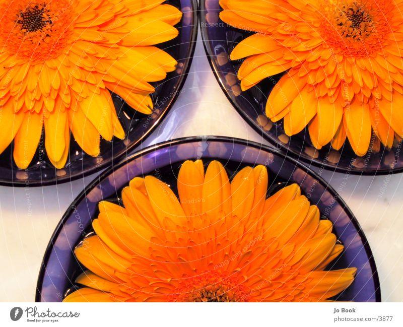 Blau.Gelb IIII Ausschnitte Wasser Blume gelb Sonnenblume Schalen & Schüsseln