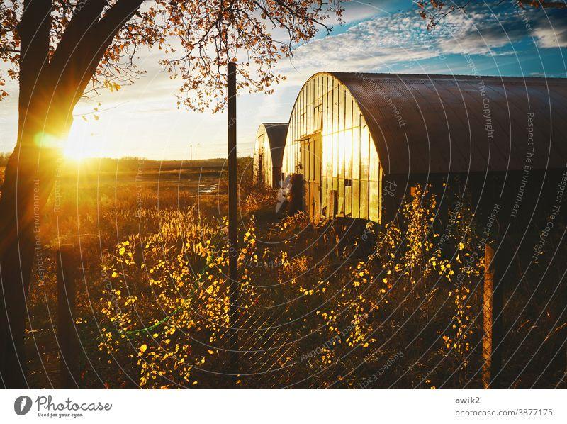 Überbleibsel Lagerhalle Blech Architektur Bauwerk verlassen geheimnisvoll Gegenlicht Sonnenuntergang strahlend leuchtend Laubbaum Birke einfach Horizont Wetter