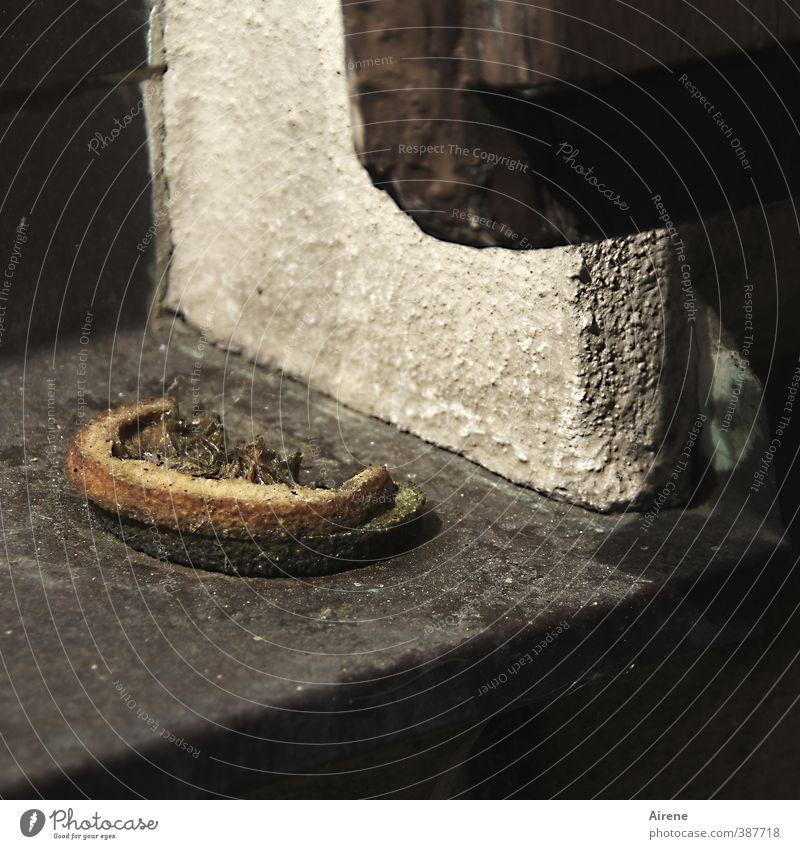 Gammelobst Lebensmittel Frucht Orange Vegetarische Ernährung verdorbenes Obst Rohkost Fenster Fensterbrett Fenstersims dehydrieren alt Ekel braun grau Senior
