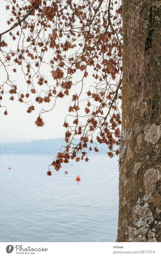 Zürichsee  im Herbst zürichsee Baumstamm Rinde Blätter Äste Boje Umwelt blätter Zweige u. Äste grün natur äste baumstamm Wald Natur Menschenleer Pflanze Blatt