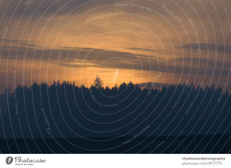 Bernstein glüht in der Dämmerung, kurz nach Sonnenuntergang, hinter einem Nadelwald warm glühen Abenddämmerung Wald Bäume Landschaft Hintergrund Baum Nadelbäume