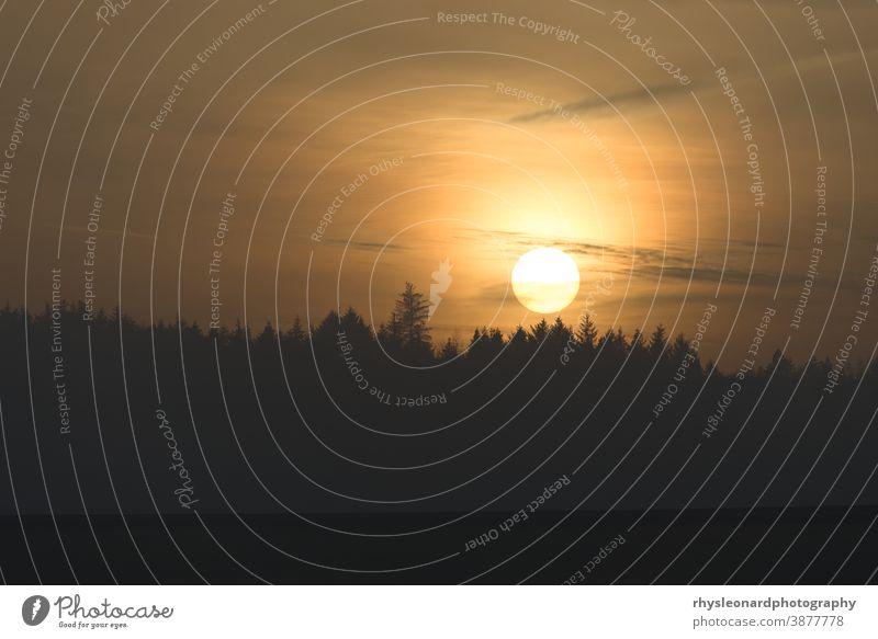 Die goldene Sonne berührt die fernen Baumwipfel, während sie bis zum Horizont sinkt. Wald mit der Silhouette Sonnenuntergang Telebild warm glühen Bernstein