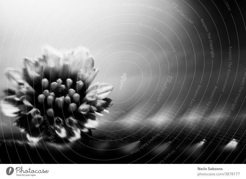 kleine Chrysanthemenblüte Makro-Bild Herbst Hintergrund schön Schönheit Blütezeit Überstrahlung Botanik hell Postkarte Nahaufnahme Farbe Tag