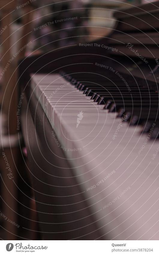 Klaviertastatur Musik Klavier spielen Musikinstrument Musiker Innenaufnahme Finger Spielen Hand musizieren Freizeit & Hobby Klang Konzert Kunst