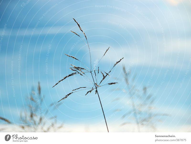 Der Sonne entgegen Himmel Natur blau Sommer Pflanze Sonne Freiheit Stil Luft authentisch warten Wachstum Schönes Wetter Energie Hoffnung Blühend