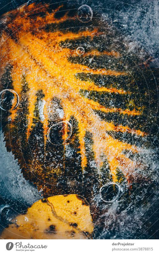 Gefrorenes Laub in Berlin I Natur Umwelt Pflanze Herbst Baum Akzeptanz Vertrauen Glaube Herbstlaub Herbstfärbung Naturerlebnis herbstlich Herbstwald Laubwald