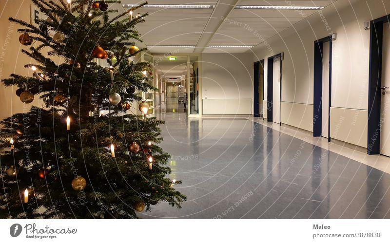 Geschmückter Weihnachtsbaum auf dem Flur des Krankenhauses Hintergrund Weihnachten Dezember Dekoration & Verzierung Winter Feier festlich grün Glück Feiertag