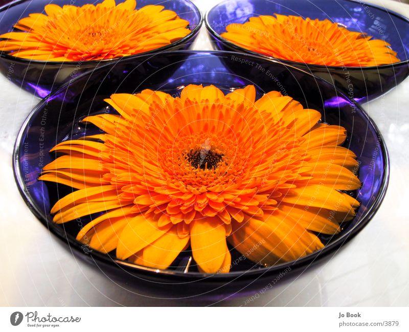 Blau.Gelb Perspektiven II Wasser Blume gelb Sonnenblume Schalen & Schüsseln