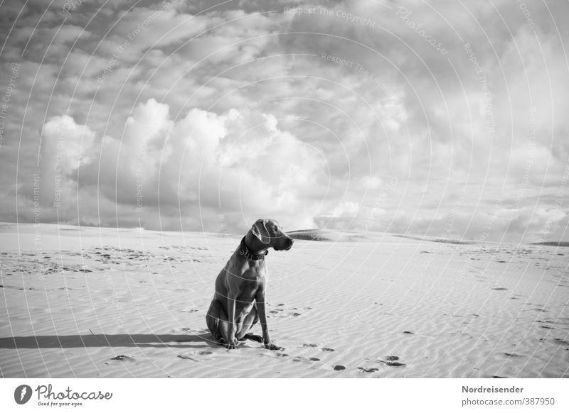 Edel Hund Himmel Einsamkeit Wolken Tier Ferne Freiheit Sand sitzen Klima ästhetisch beobachten Freundlichkeit Abenteuer Neugier Wüste